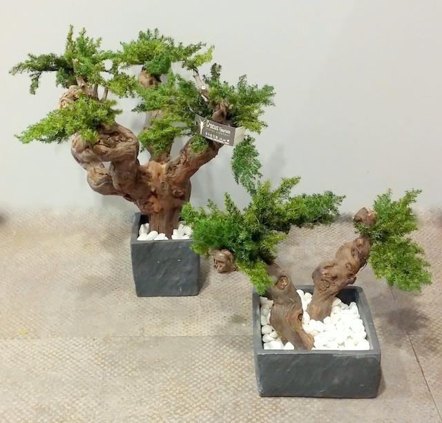 Végétaux stabilisés