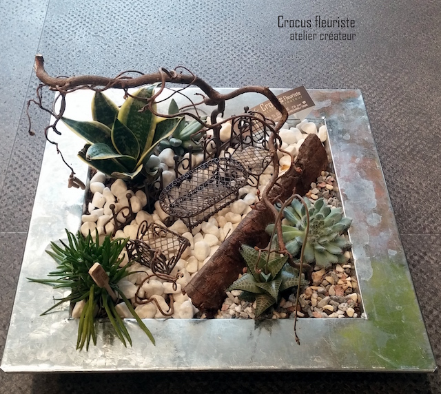 Mini jardin de succulentes