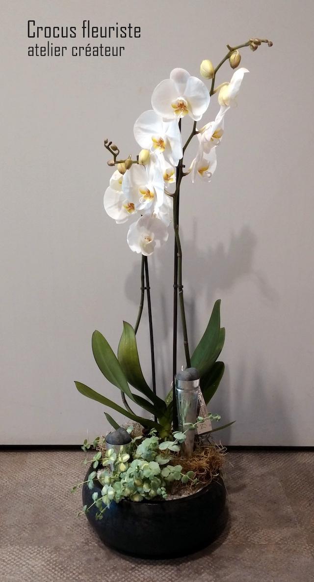 Composition de plantes fleuries d'intérieur